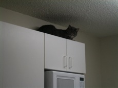 On top of the cabinets in Tampa