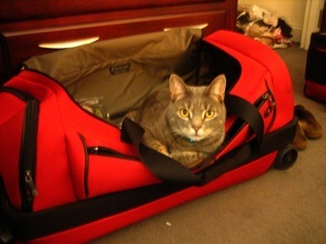 Cat supplies go in the bottom compartment