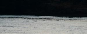 Whale fins