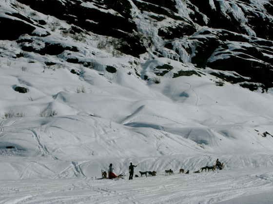 A dogsled near the glacier